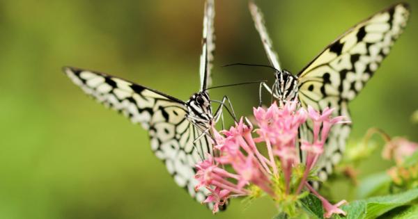 Hva skjer når Morten Harket jakter på sommerfugler